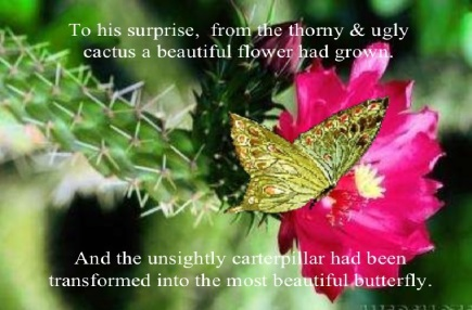 cactus flower with butterfly